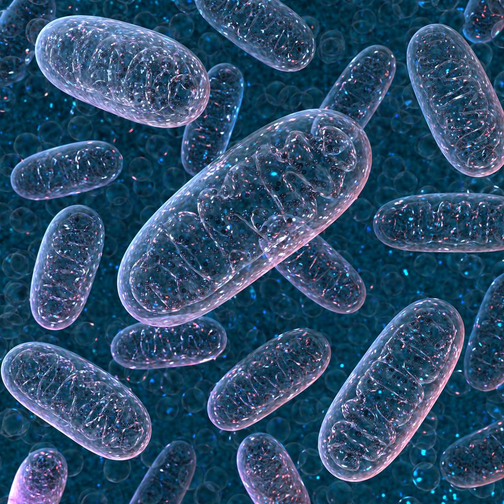 Mitocondri Umano